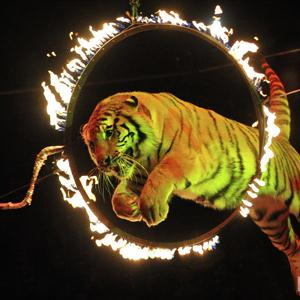 Цирки Светлограда