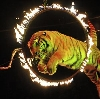 Цирки в Светлограде